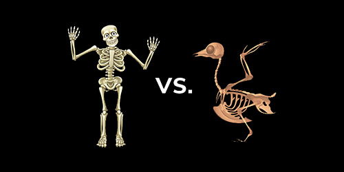 Bird vs Human Skeleton