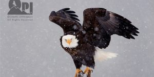eaglephoto