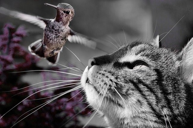 Cat-and-Hummingbird
