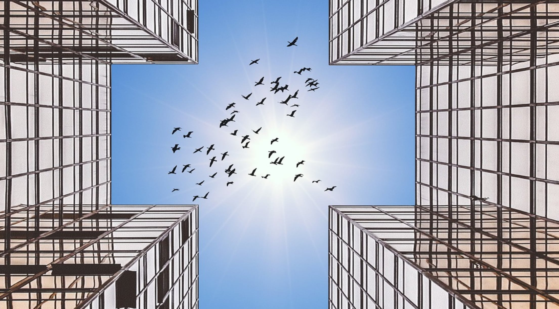 Glass Buildings with Birds