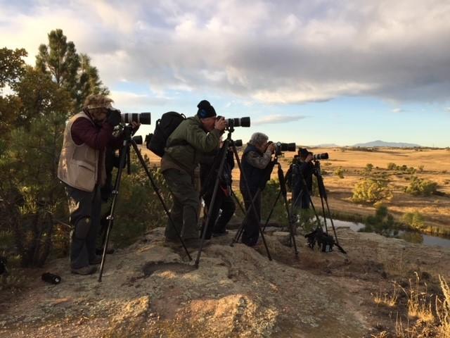 Peoople Photographing Birds