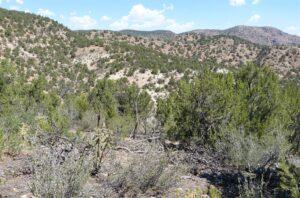 Landscape of Pinon Pine habitat