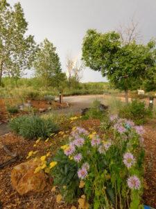 Denver Audubon garden