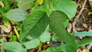 leafcutter holes