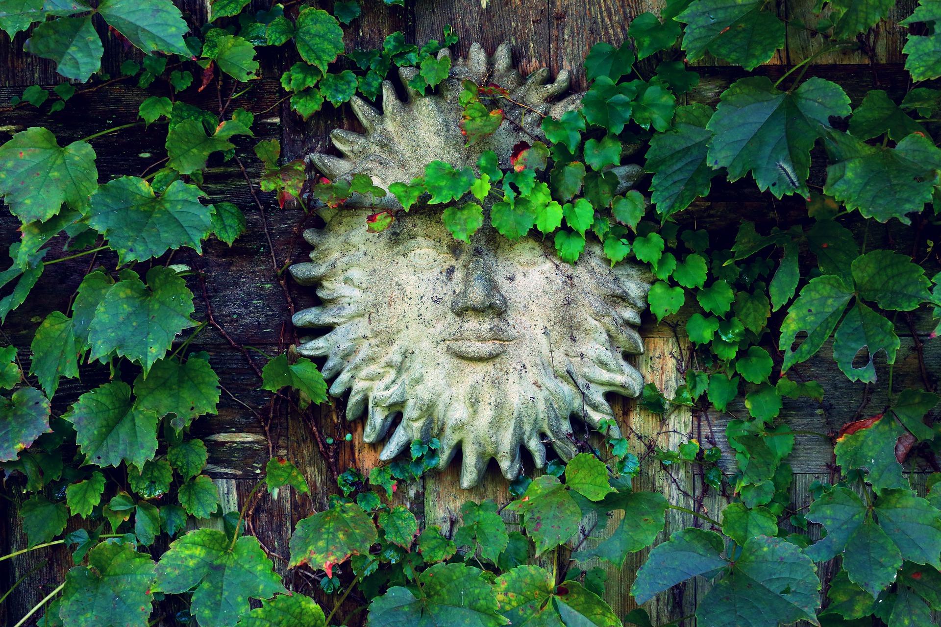 sun face in ivy